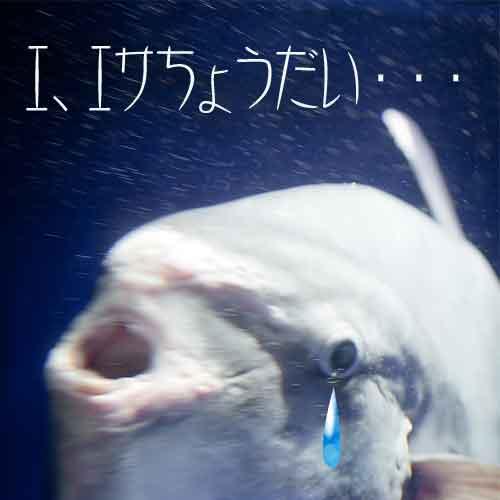 やら 魚 を 餌 た ない に 釣っ